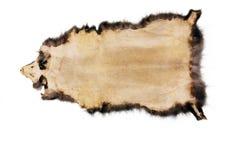 фактический кожаный образец Стоковые Фото