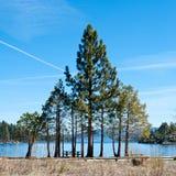 фамильные дерев дерев стоковые фото