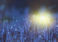 Фантазия, абстракция травы в лесе в раннем утре стоковые фото