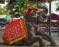 Фантазия elephent в Таиланде Стоковые Изображения RF