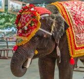 Фантазия elephent в Таиланде Стоковое Изображение