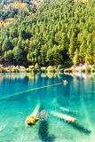 Фантастическая лазурная вода озера с погруженными в воду стволами дерева Стоковая Фотография