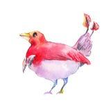 Фантастическая красная птица Красная акварель птицы Фантастическая птица d Стоковая Фотография