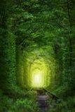 Фантастические деревья - тоннель влюбленности с fairy светом Стоковое фото RF