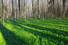 Фантастические завораживающие тени дерева покрывают лужайку Стоковая Фотография