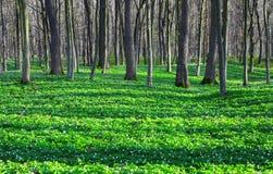 Фантастические завораживающие тени дерева покрывают лужайку Стоковые Фотографии RF
