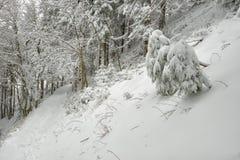 Фантастический ландшафт зимы вечера Стоковые Изображения RF