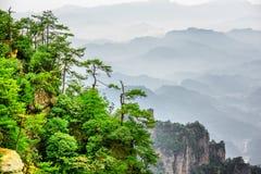Фантастический взгляд деревьев растя na górze утеса, гор воплощения Стоковые Фотографии RF
