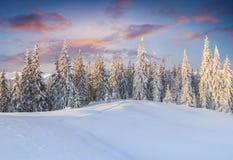 Фантастический восход солнца зимы в прикарпатских горах с крышкой снега Стоковые Изображения RF
