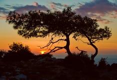 Фантастический заход солнца с силуэтом дерева Стоковое Изображение RF