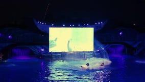 Фантастический кит скача в торжество Shamu освещает вверх ночь в свете торжества Shamu вверх по ночи на Seaworld 2