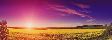 Фантастический ландшафт, величественный заход солнца Великолепные виды бесконечного канола поля накаляя солнечным светом стоковые изображения