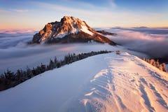 Фантастический ландшафт зимы вечера и утра Красочное небо overcast Австрия, Европа Дерево мира красоты волшебным покрытое снегом стоковые фото