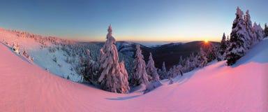 Фантастический ландшафт зимы вечера и утра Красочное небо overcast Австрия, Европа Дерево мира красоты волшебным покрытое снегом стоковые изображения rf