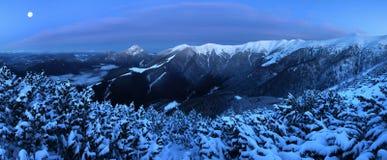 Фантастический ландшафт зимы вечера и утра Красочное небо overcast Австрия, Европа Дерево мира красоты волшебным покрытое снегом стоковая фотография