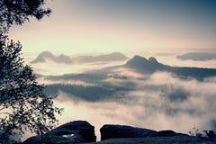 Фантастический рассвет после ненастной ночи Взгляд через деревья к глубокой туманной долине внутри рассвет Туманное и туманное ут Стоковые Изображения RF
