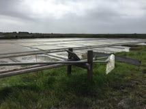 Фантастическое соленое болото стоковые изображения