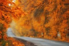 Фантастичная дорога осени Стоковая Фотография