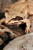 Фантастичная лягушка Стоковые Фото