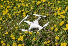 Фантом 4 Quadrocopter DJI на расчистке с цветками одуванчика Стоковая Фотография