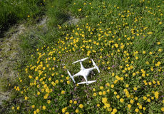 Фантом 4 Quadrocopter DJI на расчистке с цветками одуванчика Стоковое Фото