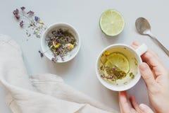 фарфор dishes свежее время чая клубник фарфора Руки держа чашку горячего чая Высушите травяной чай, известку и ложку на серой пре Стоковые Изображения RF
