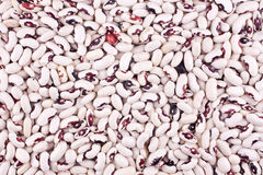 фасоли белые Стоковая Фотография