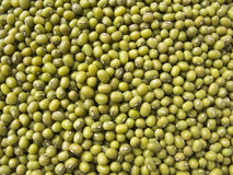 фасоли зеленый mung Стоковое фото RF