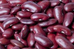 фасоли обрамляют полный красный цвет почки Стоковая Фотография