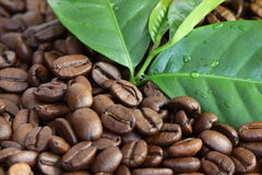 Фасоли Coffe Стоковые Фото