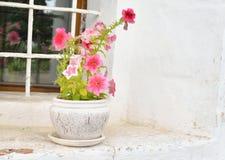 фасонируемые цветки старое окно вазы stylization Стоковое Изображение
