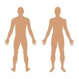 Фасонируйте диаграмму силуэт шаблона человека твердую (фронт & задняя часть соперничают бесплатная иллюстрация
