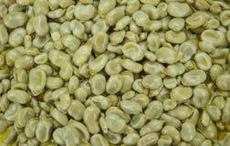Фасоли в оливковом масле Стоковое фото RF