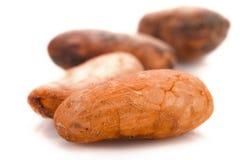 Фасоли какао Стоковое Изображение