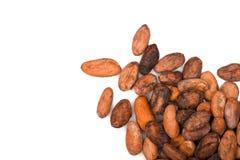 Фасоли какао Стоковые Изображения RF