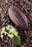 Фасоль какао на предпосылке фасолей Стоковая Фотография