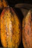 Фасоль Cacoa Стоковое фото RF