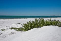 фауна пляжа Стоковое Фото