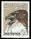 Фауна, птицы серии, орел Стоковая Фотография RF