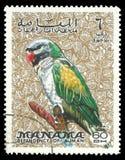 Фауна, птицы серии, попугай Стоковое Изображение RF