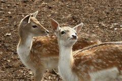 фауна стоковое изображение