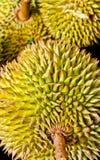 Федерирование тайского дуриана. стоковое изображение rf