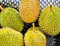 Федерирование тайского дуриана. стоковые изображения