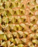 Федерирование тайской предпосылки текстуры дуриана Стоковые Изображения