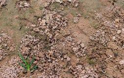 Фекалии earthworms Стоковая Фотография