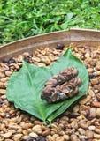 Фекалии с врезанными кофейными зернами стоковая фотография