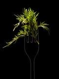 Фенхель на черной предпосылке Стоковые Изображения RF
