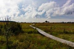 Фены деревянного пешего пути высокие благоустраивают Botrange Бельгию Стоковые Фотографии RF