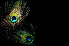 ферзи павлина пера танцы Стоковая Фотография