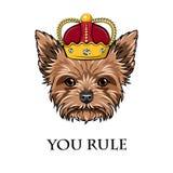 Ферзь йоркширского терьера крона Король собаки Вы управляете текстом вектор Стоковое фото RF